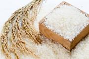 Giá gạo có thể tăng thêm 20 USD/Tấn trong 3 tháng tới